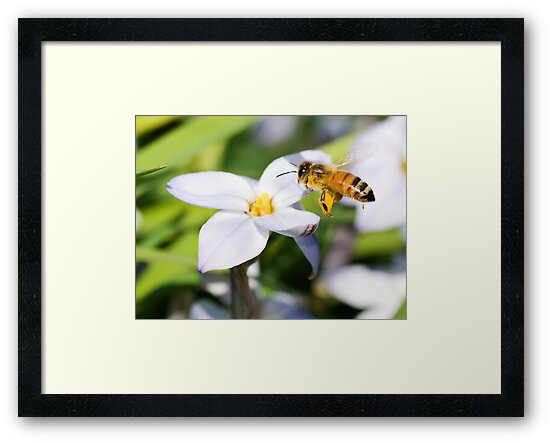 Busy Bee by James  Messervy