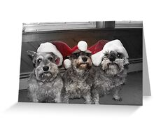 """Christmas Schnauzers"" Greeting Card"