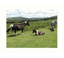 wild ponies on the moors in England Art Print
