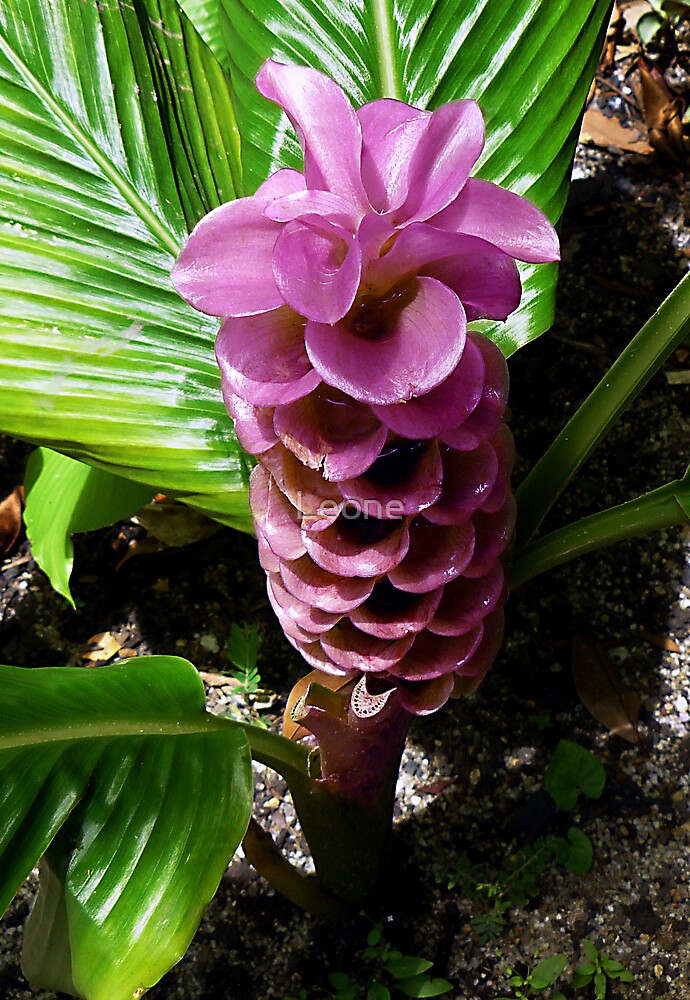 Pink Plant by Leone Fabre