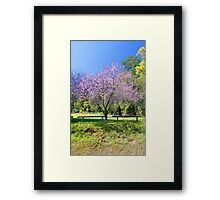 Pink Cherry Blossom Tree Framed Print
