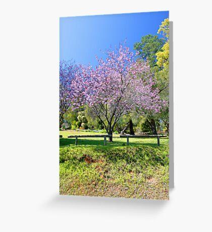 Pink Cherry Blossom Tree Greeting Card