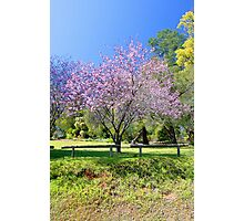 Pink Cherry Blossom Tree Photographic Print