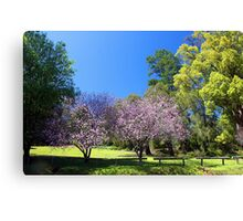 Two Pink Cherry Blossom Trees Canvas Print