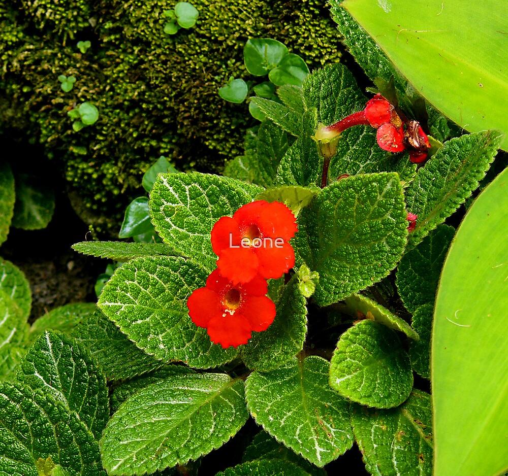 orange flower by Leone Fabre