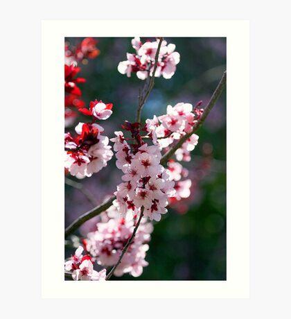 Pink Cherry Blossom Flowers Art Print