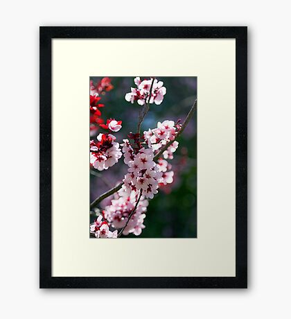 Pink Cherry Blossom Flowers Framed Print