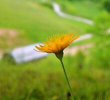 Yellow Flower by Jason Helton