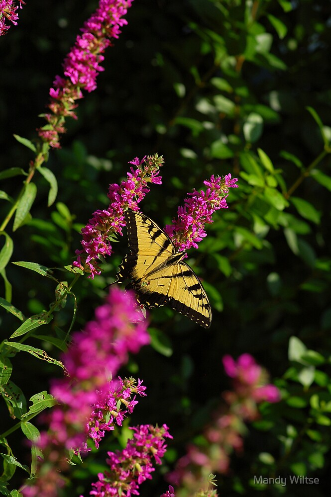 Nature's Beauty by Mandy Wiltse