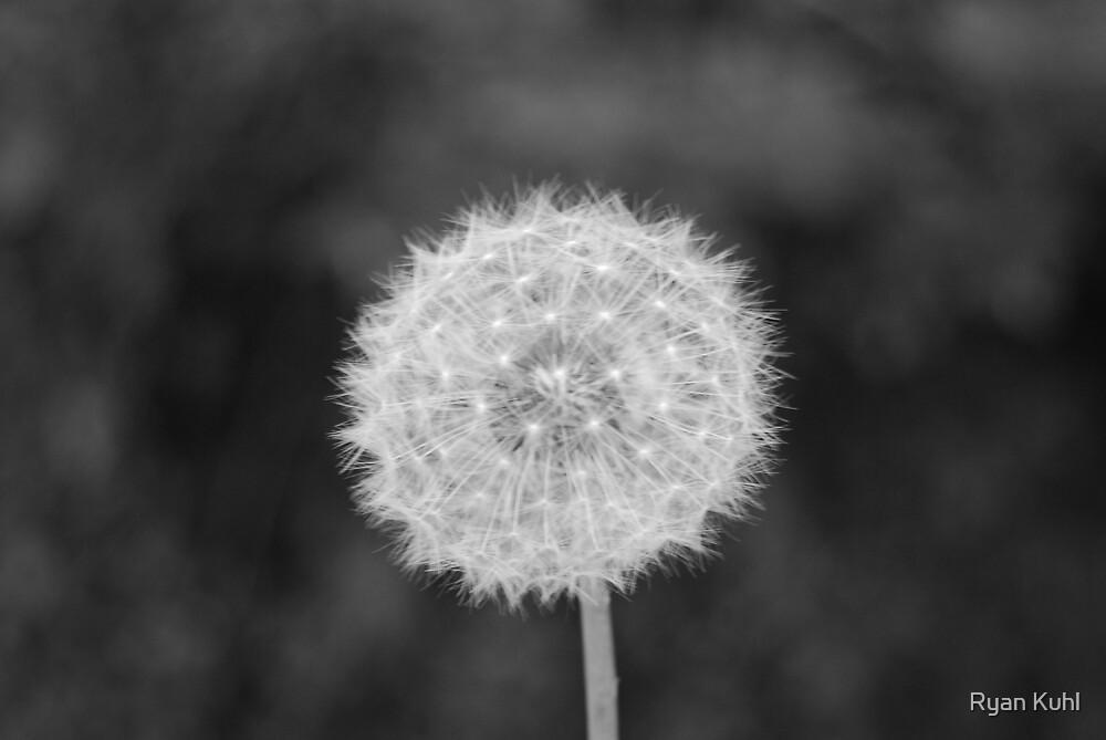 Birthday Wish by Ryan Kuhl