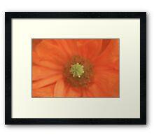 Peach Delight Framed Print