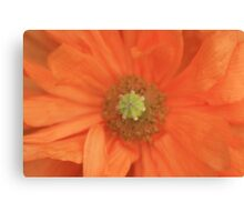 Peach Delight Canvas Print