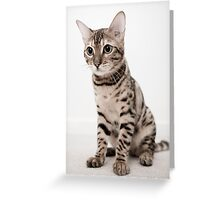 Growing into my paws Greeting Card