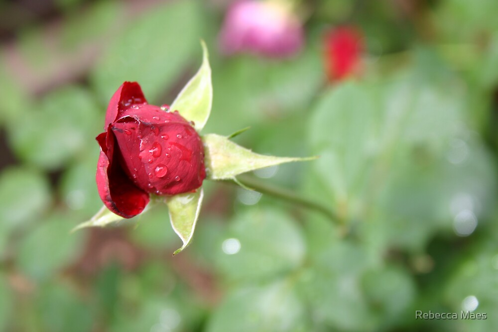 Red Rain Rose by Rebecca Jakel