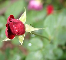 Red Rain Rose by Rebecca Jakel