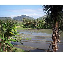 Balinese Terraces Photographic Print