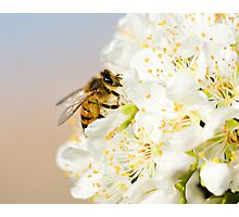 Nature's Buffet Photographic Print