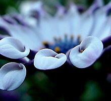 Beauty Within Beauty by Carmen Hellofs