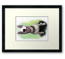 Lola English Bull Terrier Painting Framed Print