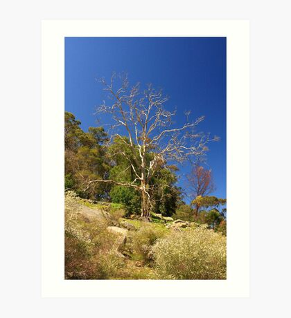 Tree On The Hill  Art Print