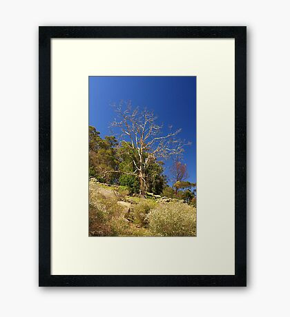 Tree On The Hill  Framed Print