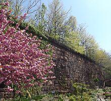 Spring Colors, Harsimus Branch Embankment, Former Pennsylvania Railroad Embankment, Jersey City, New Jersey  by lenspiro