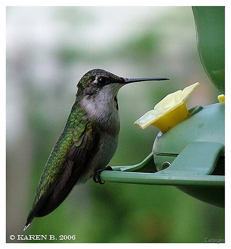 HummingBird by Cateyes