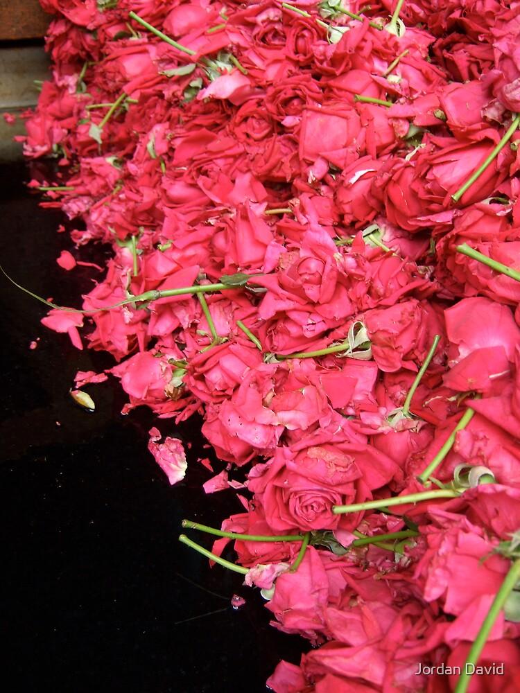 wet roses roses roses by Jordan David