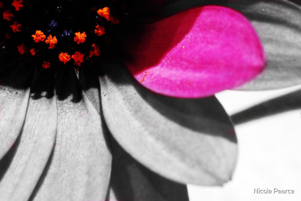 Pink Petal by Nicole Pearce