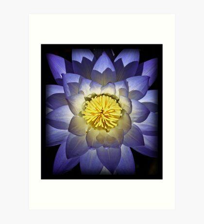 Kakadu Lily Art Print