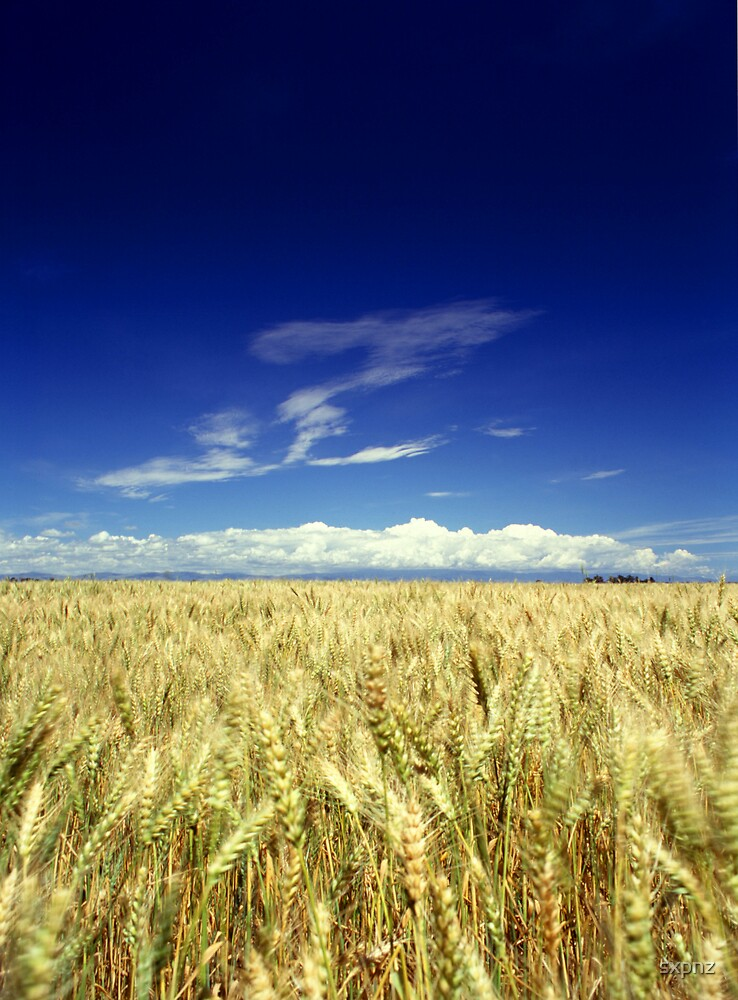 Wheat field by sxpnz