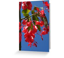 Tree Begonia Greeting Card