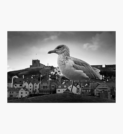 Seagull and St Mary's Photographic Print