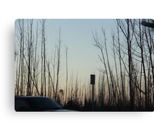 Desolate Forest Canvas Print
