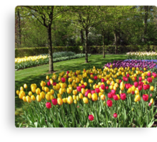 Multicoloured Tulips - Keukenhof Gardens Canvas Print