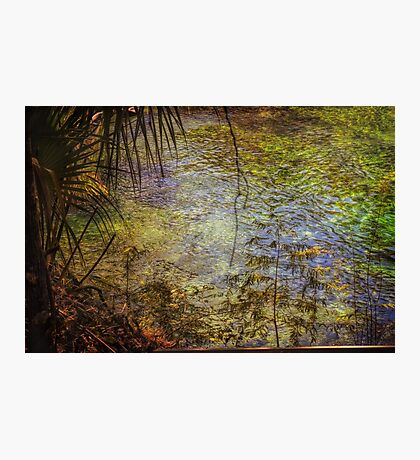 Enchanted Spring Photographic Print