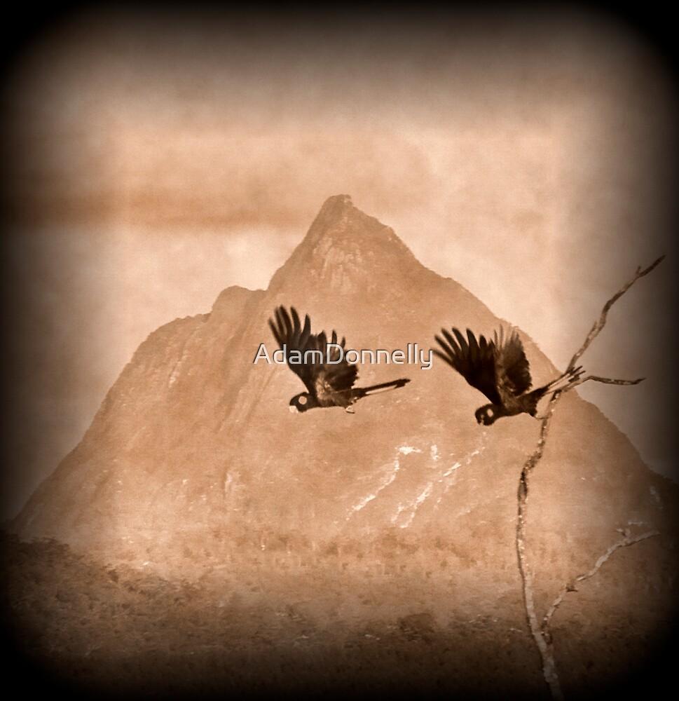 Black Cockatoos Mt Beerwah by AdamDonnelly