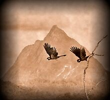 Black Cockatoos Mt Beerwah by AdamDonnelly