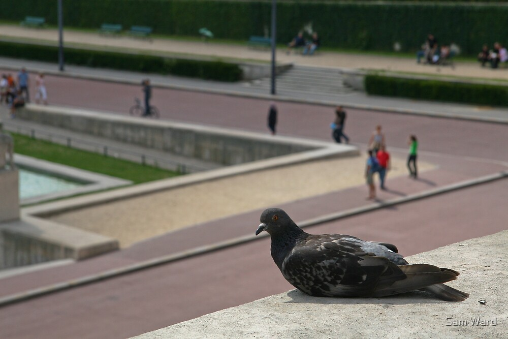 A Pigeon in Paris by Sam Ward