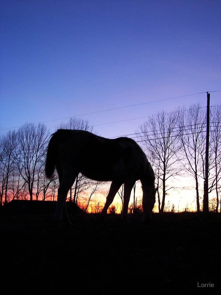 horse in sunset by Lorrie