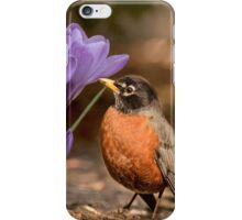 Robin in the spring flowers iPhone Case/Skin