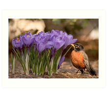 Robin in the spring flowers Art Print