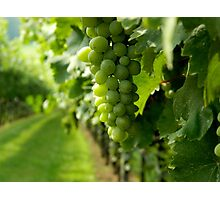 Vineyard View   ^ Photographic Print