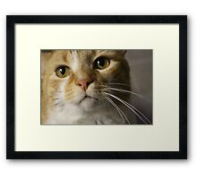 Mighty Red Cupcake Framed Print