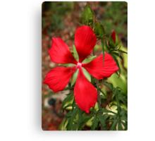 Texas Star Hibiscus II Canvas Print