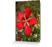 Texas Star Hibiscus II Greeting Card