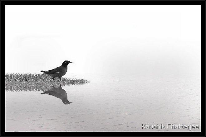 The Bird 2 by Kaushik Chatterjee