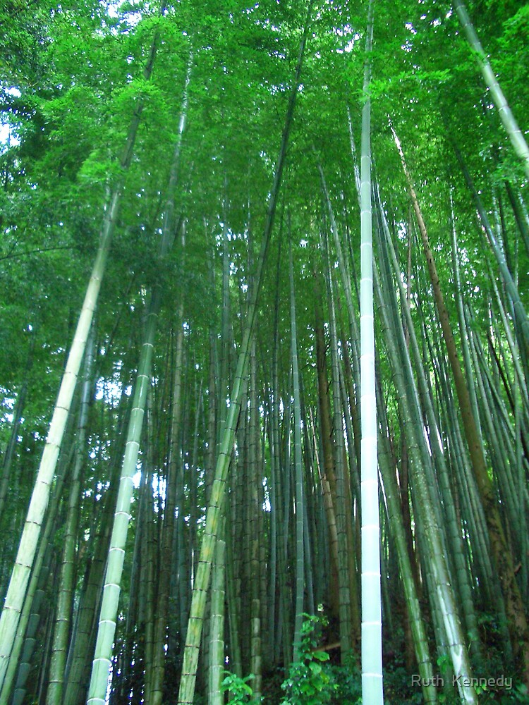 bamboo  by Ruth  Kennedy