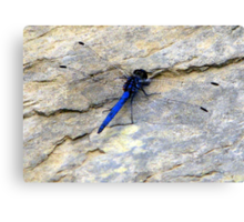 Blue dragonfly in her transparent dress! Canvas Print