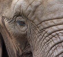 Gentle Giant by LisaRoberts